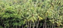 Pictures-of-world-famous-hot-jungle