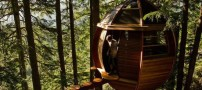 Very-cool-tree-house-like-eggs-+-pictures