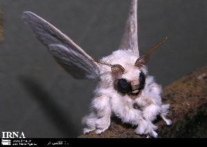 عجیب ترین پروانه دنیا شناسایی شد + عکس
