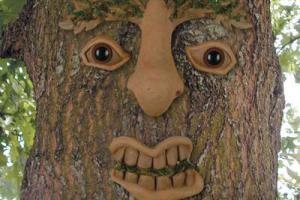 هماهنگی درختی عجیب در دنیا با کنکور پسر خانواده!