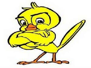 فال پرنده !