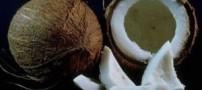 خواص نارگیل چیست