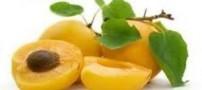 ارزش غذایی زرد آلوی خشک و تازه