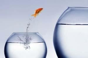 تو ماهی قرمزی و من حسرت تور !!!