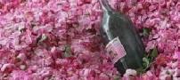 اثرات بسیار مفید گلاب بر بدن