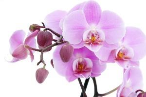 معنی گل های مختلف برای هدیه دادن به دیگران !!