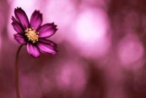 رایحه گل مورد علاقه شما چیست ؟!!