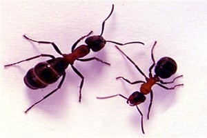 داستان خواندنی ازدوستی سلیمان با مورچه ها