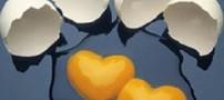 آیا تخم مرغ باعث چاقی می شود
