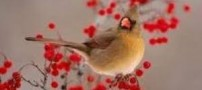 تاثیر دیدن گل بر هورمون جنسی پرندگان نر!!