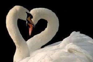 10 راه تضمینی برای عمیق تر شدن روابط زناشویی