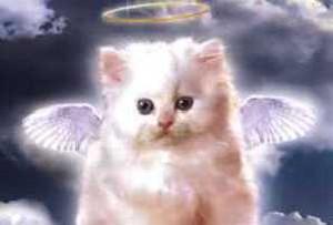 طنز، می دونستید فرشته ها زن هستند؟!!