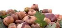 خواص خوراکی و درمانی بلوط