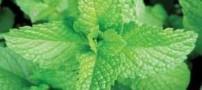 گیاهی مضر برای زخم معده