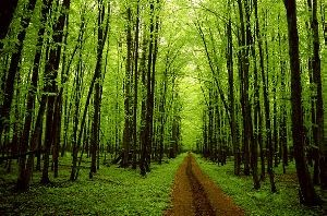 رابطه شخصیت و تولد هر فرد با درخت