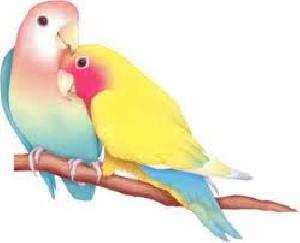 طالع بینی، پرنده های ماه تولد به شما چه می گویند