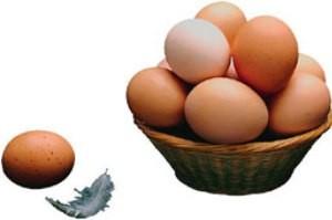 تخم مرغهای شناسنامه دار کیلویی 7000 هزار تومان!