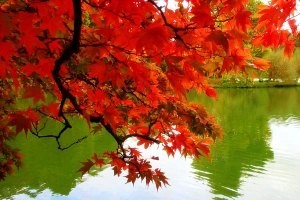 شگردهای عکاسی در فصل پاییز!!