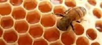 آموزش پرورش زنبور داری و نگهداری آن