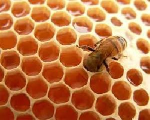 مراحل گام به گام آموزش پرورش زنبور عسل