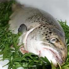راه تشخیص ماهی سالم از فاسد