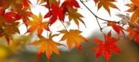 نکاتی برای کسانی که در پاییز افسرده می شوند