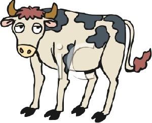 داستان بسیار جالب و زیبای دم گاو رو بگیر!!