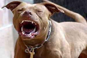 سگ بی وفایی که نوزاد صاحبش را کشت!!