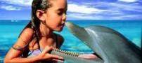 موفقیت بی نظیر دانشمندان در حرف زدن با دلفین ها