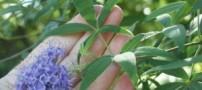 گیاه جادویی برای زنان