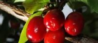 میوه ای برای از بین بردن چربی های شکم