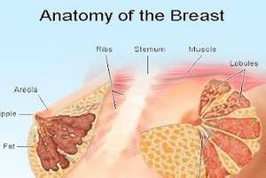 چرا سینه ها دچار افتادگی می شود