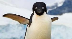 علت علمی پرواز نکردن پنگوئن ها!