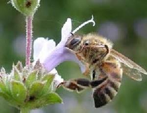 رازهای خواندنی زندگی زنبور ها