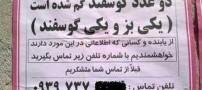 عکس های بسیار خنده دار و جدید از سوتی های ایرانی
