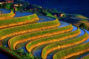زیبا و عجیب ترین مزارع برنج دنیا (تصاویر)