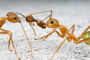ژست عصبانی بودن یک مورچه! (تصویر)