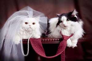 جشن عروسی حیوانات (عکس)