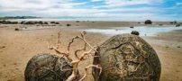 عجیب و غریب ترین سواحل دنیا (عکس)