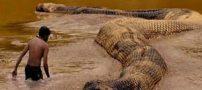 ترسناکترین موجودات غول پیکری که تا به حال دیده شده اند با عکس / مقاله و تحقیق