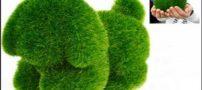 آموزش سبزه مدل سگ سال 97 با تصاویر