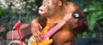 باهوش ترین حیوانات جهان + تصاویر / مقاله و تحقیق