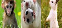 تعبیر خواب میمون، موش و خرگوش
